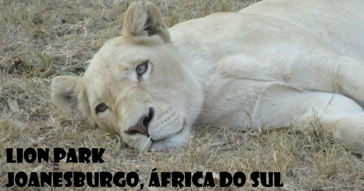 joanesburgo - lion park
