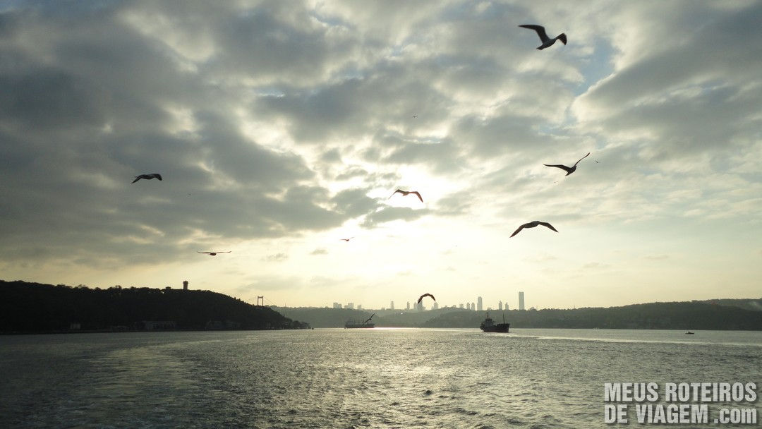 Aves seguindo o barco - Istambul, Turquia