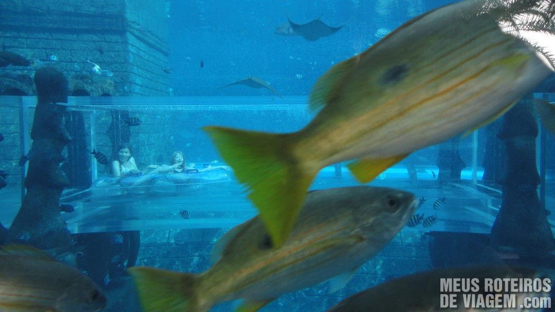 Bóias passando no interior do aquário