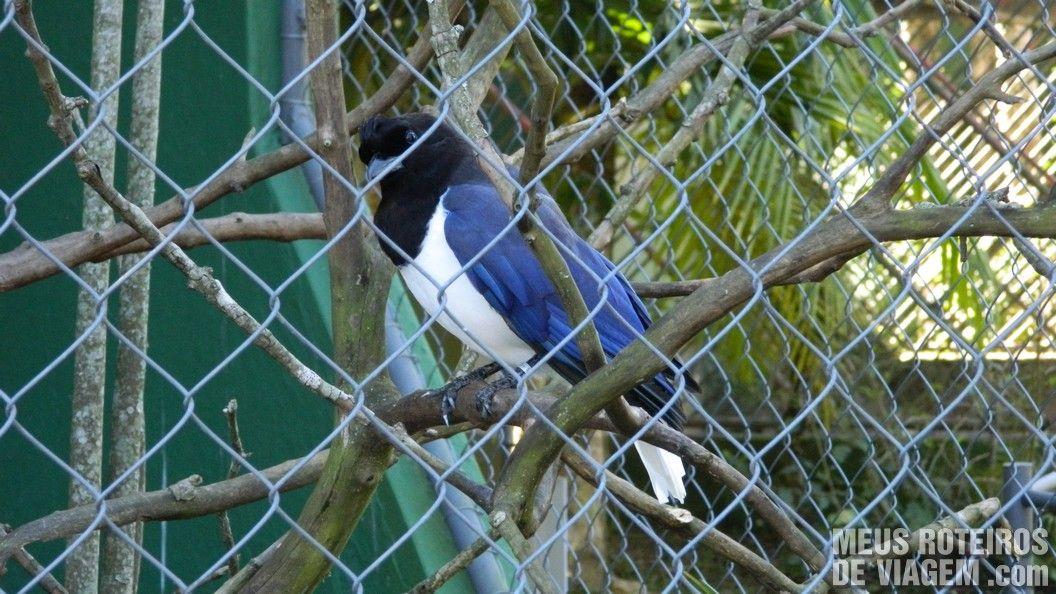 Arara no Zoológico de Balneário Camboriú