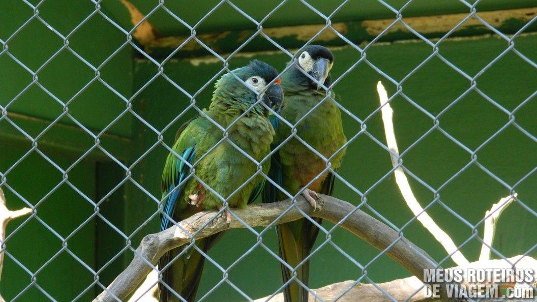 Papagaios no Zoológico de Balneário Camboriú
