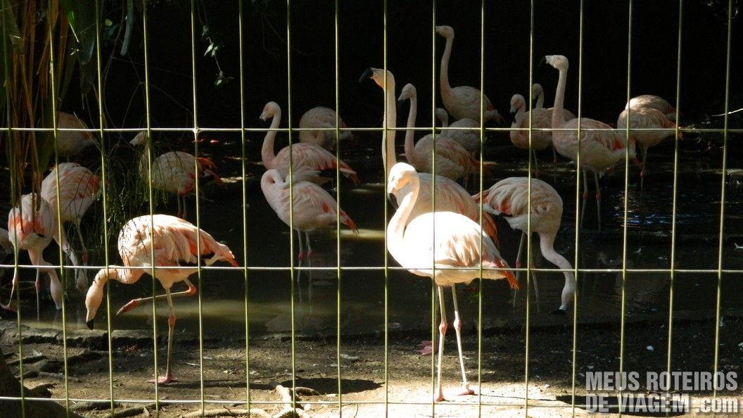 Flamingos no Zoológico de Balneário Camboriú