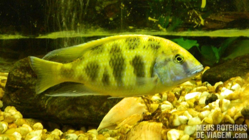 Peixe no Zoológico de Balneário Camboriú