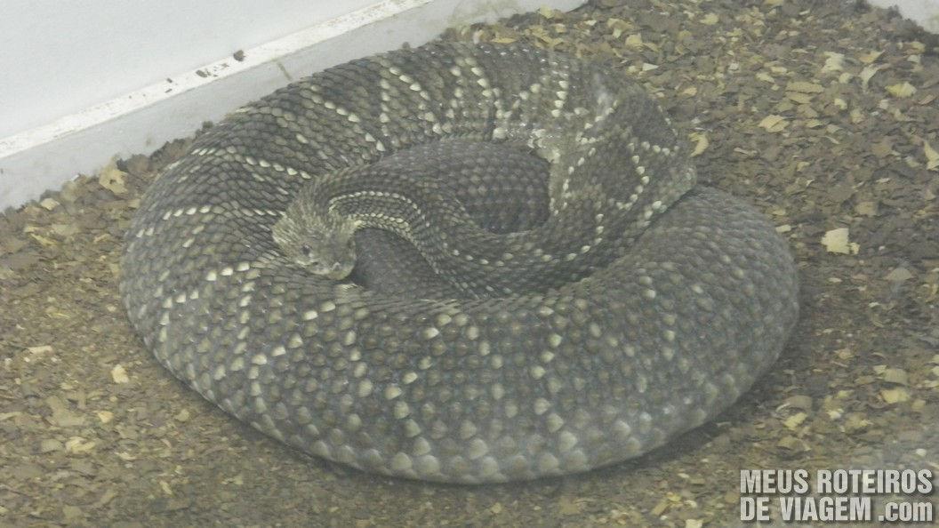 Cobra no Zoológico de Balneário Camboriú