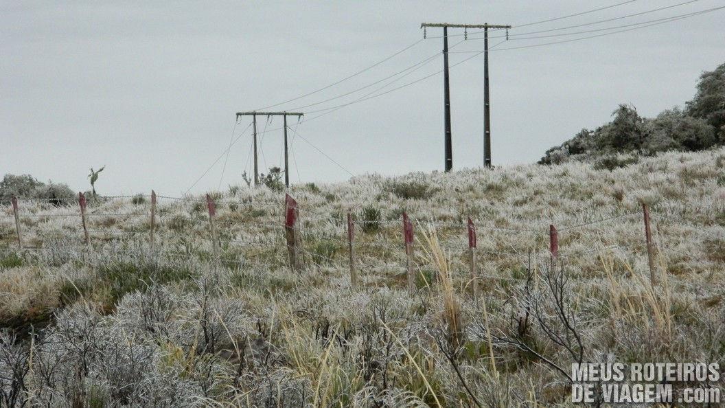Vegetação congelada em Urubici