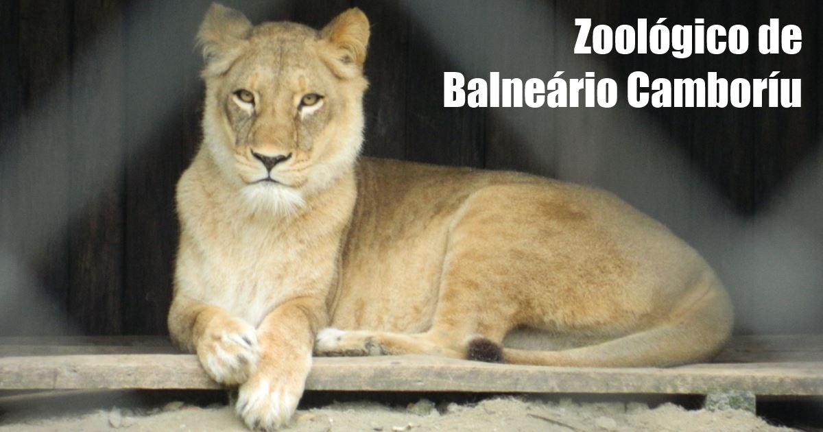 balneario camboriu - zoo