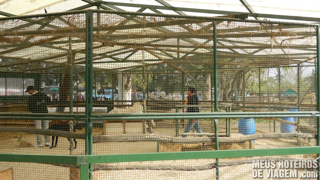 Jaula no Zoo Lujan - Buenos Aires