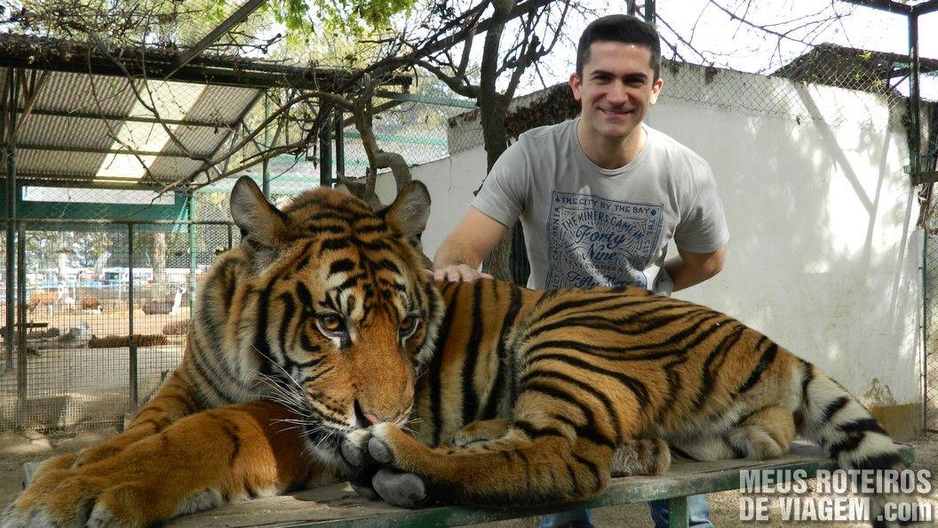Na jaula do tigre