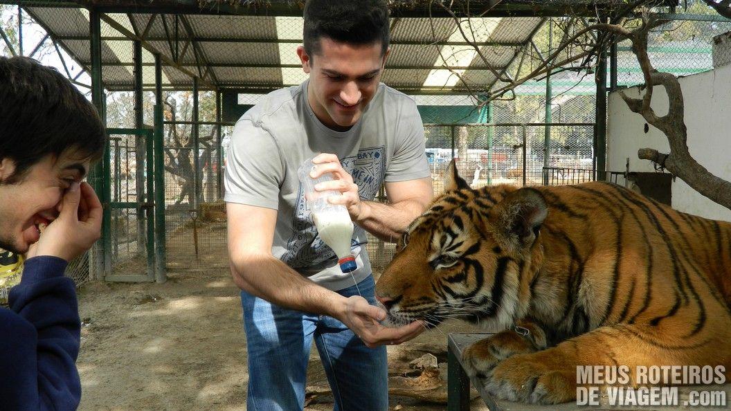 Leite para o tigre