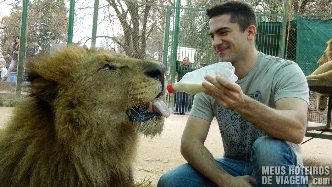 Leite para o leão