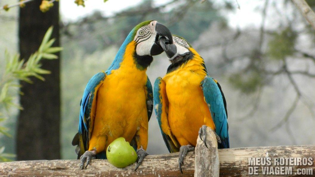 Araras no Zoo Lujan - Buenos Aires