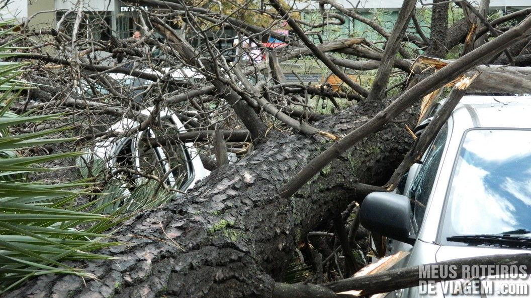 Veículos destruídos pela árvore