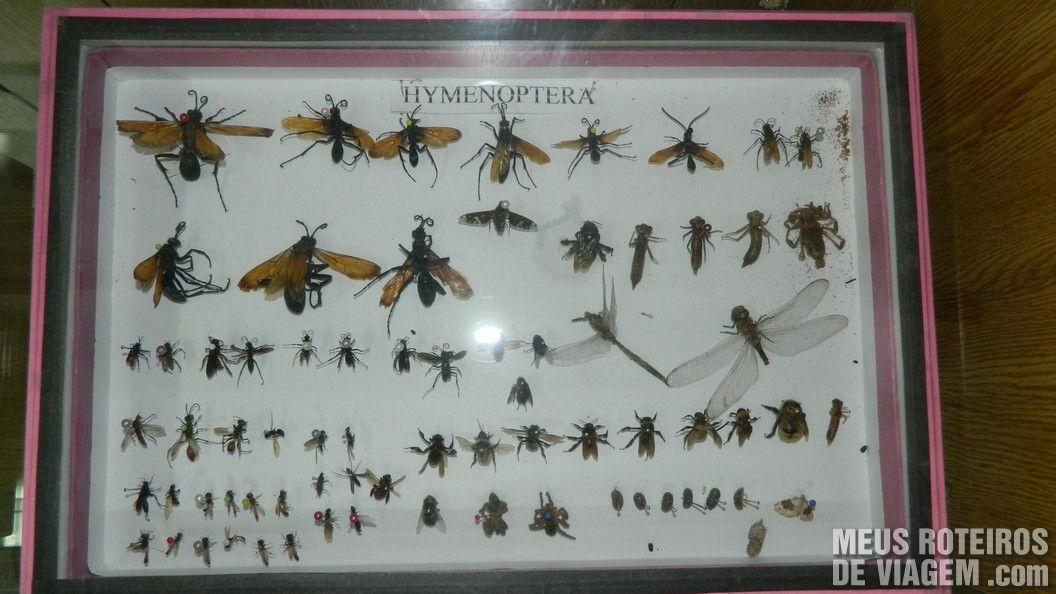 Espécies de insetos