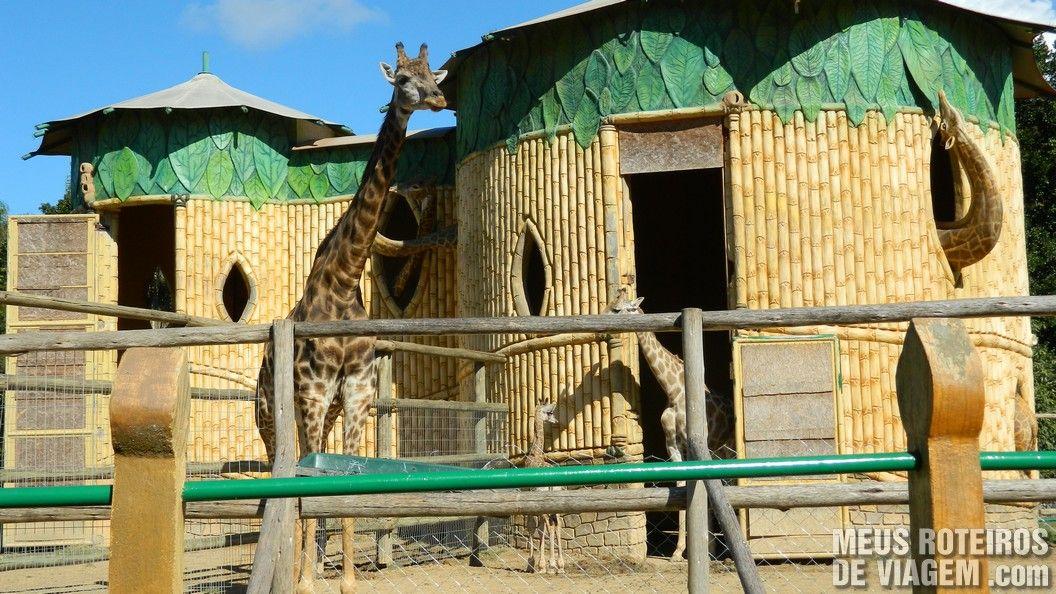 Zoológico do Parque Beto Carrero World, Penha/SC