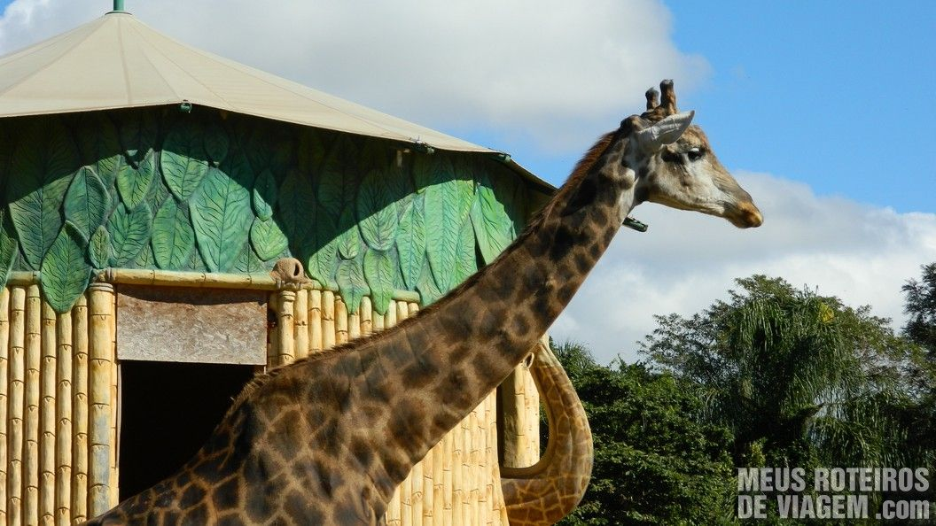 Girafa - Parque Beto Carrero World
